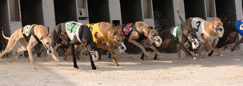Daytona Dog Track >> Racetrack & Poker Room, Simulcast Wagering & Poker ...