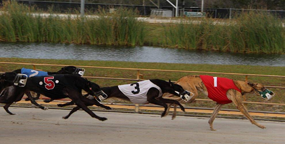 Greyhound Racing at Daytona Beach Racing & Card Club