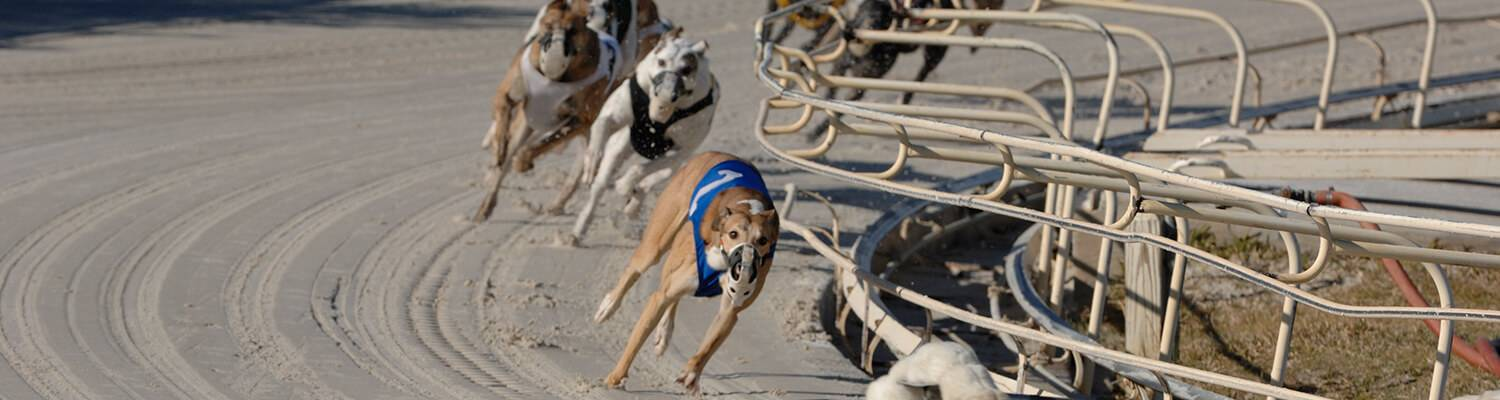 Daytona Dog Track >> Live Simulcast Racing Promotions Daytona Beach Fl