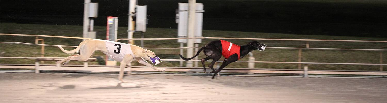 Greyhound Racing At Daytona Beach Card Club