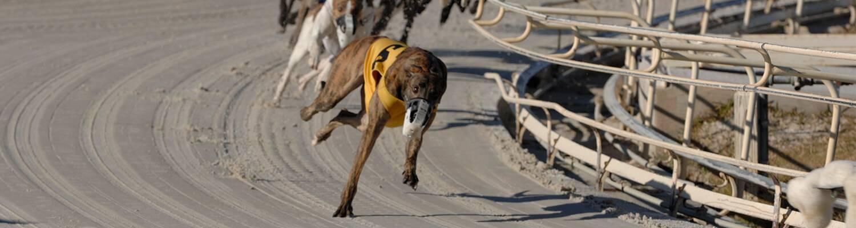 racing promotions 1500x400?h=400&w=1500&la=en&hash=105692C3595C7C5297D149428F875B33A4432BAA simulcast wagering greyhound & horse racing daytona beach racing