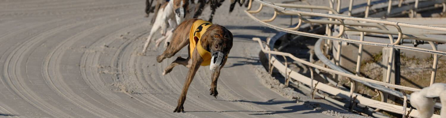 Greyhound Racing Promotions at Daytona Beach Racing & Card Club