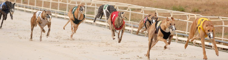Live Greyhound Racing Schedule For Daytona Beach Fl Daytona Beach