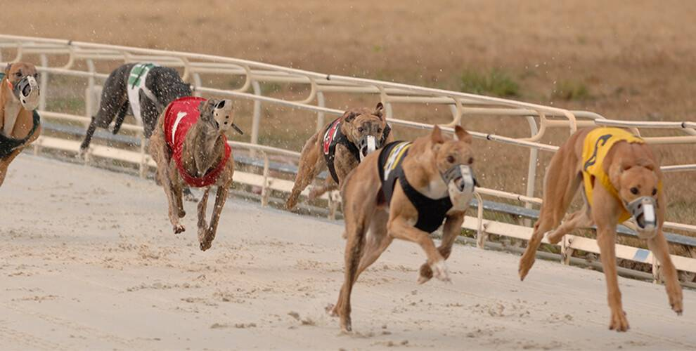 Greyhound Dog Racing Schedules at Daytona Beach Racing & Card Club