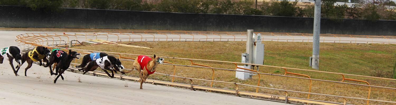 Racing Statistics Greyhound Racing Simulcast Racing Daytona