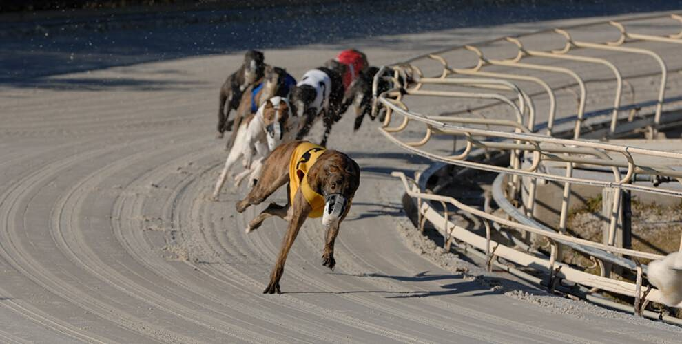 Greyhound Dog Racing Results at Daytona Beach Racing & Card Club